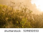 morning fog and cobwebs in the...   Shutterstock . vector #539850553