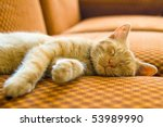 The Ginger Cat Sleeping On Couch