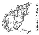pitaya sketch of tropical... | Shutterstock .eps vector #539904193