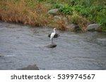 hida furukawa river canal | Shutterstock . vector #539974567