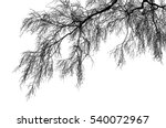 realistic birch tree branches... | Shutterstock .eps vector #540072967