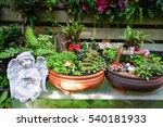 mini garden in the pot with...   Shutterstock . vector #540181933