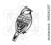 beautiful hand drawn vector...   Shutterstock .eps vector #540241207
