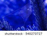 dew on web. morning. | Shutterstock . vector #540273727