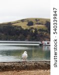 Small photo of Royal Albatross Bird on Akaroa Harbor