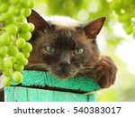 Cat And Grape