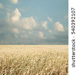 wheat field and blue sky with... | Shutterstock . vector #540392107