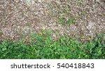 creep vine wall vertical green... | Shutterstock . vector #540418843