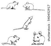 Mice. A Sketch By Hand. Pencil...