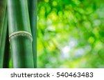 bamboo against a blurred... | Shutterstock . vector #540463483
