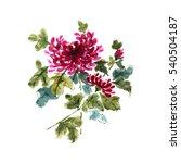 chrysanthemum flower  gorgeous... | Shutterstock . vector #540504187