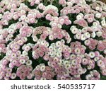 colorful flower blooming | Shutterstock . vector #540535717