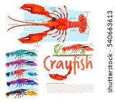 Crayfish With Information....
