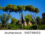 High Trees With Greenery On Th...
