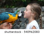 Cute Little Girl And Parrot Kiss