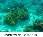 Undersea Landscape With Coral...