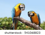 two colorful south american... | Shutterstock . vector #541068823