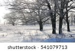 trees in snow winter field... | Shutterstock . vector #541079713