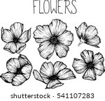 flowers drawing vector... | Shutterstock .eps vector #541107283