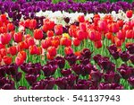 Flowerbed With Pink  White And...