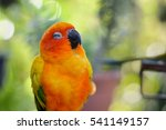 portrait of beautiful colorful... | Shutterstock . vector #541149157