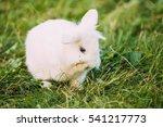 Close Profile Of Cute Dwarf Lo...