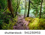 forest trail to forest lake | Shutterstock . vector #541250953
