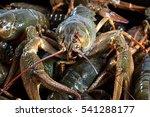 wonderful freshly caught... | Shutterstock . vector #541288177
