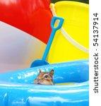 little chipmunk enjoying the... | Shutterstock . vector #54137914