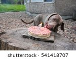 Meat Cake For Dogs