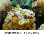 Spotted Scorpion Fish Hides...