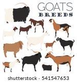 Goat Breeds Icon Set. Animal...