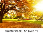 autumn tree with sun beam | Shutterstock . vector #54163474