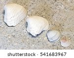Four Clam Shells Lined Up From...