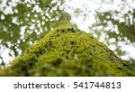 Look Up At The Moss Tree