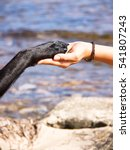 paw in hand   human hand and... | Shutterstock . vector #541807243