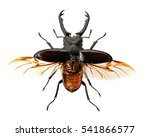Stag Beetle Isolated On White...