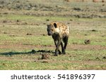walking hyena in chobe national ... | Shutterstock . vector #541896397