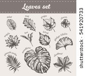 collection of high detailed... | Shutterstock .eps vector #541920733