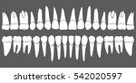 set of human teeth dental... | Shutterstock .eps vector #542020597