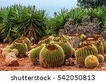 cactus landscape. mexico.... | Shutterstock . vector #542050813