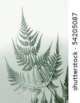 leaf of  closeup | Shutterstock . vector #54205087