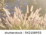 flowers | Shutterstock . vector #542108953