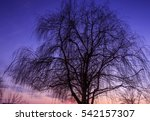 Silhouette Of Tree Weeping...