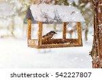 Nuthatch  Sitta Europaea Sits...