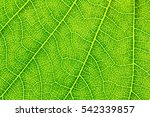 Leaf Texture Pattern For Sprin...