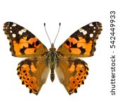 Small photo of Painted Lady (Vanessa cardui) beautiful orange and brown butterfly lower wings in natural color isolated on white background, pascinated nature