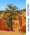 tree near breathtaking hoodoos... | Shutterstock . vector #542527087