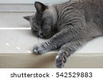 British Cat Resting On A Windo...