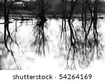 Biebrza swamps in Poland - stock photo